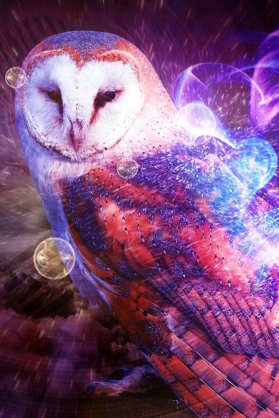 owl city zuhu