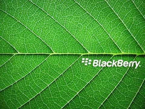 green-leaf-480x360