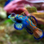 colorful-fish-android