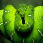 tree-snake-on-branch