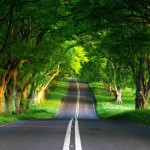 green-road-1024x1024-wallpaper-3774