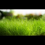 green_grass-wallpaper