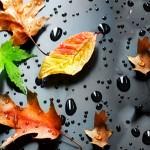 HTC leaf wallpaper