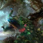 HTC Desire Wallpapers peacock