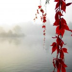 red serenity HTC Desire Wallpapers