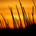 HTC Desire Wallpapers sunset hd