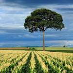HTC Desire Wallpapers tree