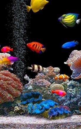 https://www.geeknaut.com/images/2012/04/Fish-swimming-in-a-aquarium.jpg