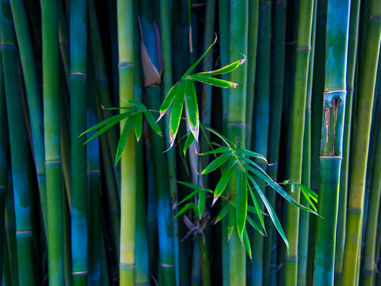 Bamboo High Res