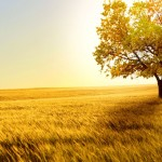 landscapes tree wallpaper