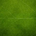 Leaf Windows 7 Wallpaper